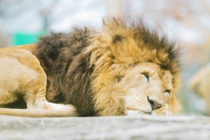 動物園を応援する
